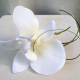 White orchid Wedding Boutonniere